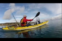 kayaking with Dolphins Army Bay NZ