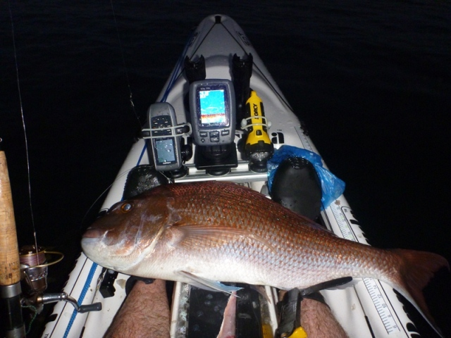 71cm snapper lande in the shallows