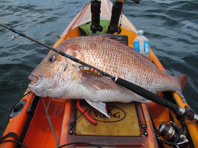 Snapper on hard body lures from kayak with Stephen Tapp
